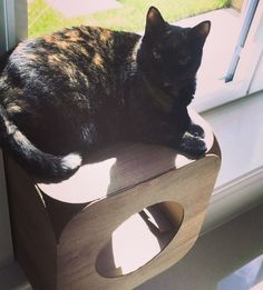 Poppy likes to use her pod as a sun lounger   That is a super idea Poppy  you look very beautiful in the sunshine  #cat #catsofinstagram #cats_of_instagram #catfurnature #catfurniture #catsinboxes #cattoy #INSTACAT_MEOWS #cutecat #PurrMachine #catsinboxes #catbox #Excellent_Cats #BestMeow #dailykittymail #thecatniptimes #catcube #catpod #ArchNemesis #FlyingArchNemesis #myindoorpaws #ififitsisits #cutecatcrew #catchalet #catnip #themeowdaily #kitty #dailykittymail #catgrass