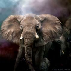 Elephant Mixed Media - Africa - Protection by Carol Cavalaris Elephant Love, Elephant Art, African Elephant, Alabama Elephant, Baby Elephants, Cross Paintings, Animal Paintings, Elephant Paintings, Resin Paintings