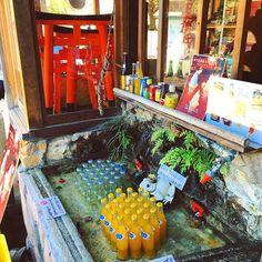 WEBSTA @ kitsune.japantrip - DIY Fridge1) take a fountain2) put cold water in it3) put drinks in it4) tadam !#systemed #diy #fridge #drink #soda #frog #princefrog #crown #inari #kyoto #japan #travel #japantrotter #traveljapan #japantrip #ilovejapan #kitsune #igersfrance #igersgironde #igersbordeaux #igersjapan #igersjp #french #girl #frenchgirl #iphonepics 10.16Photo © Virginie Bonnici