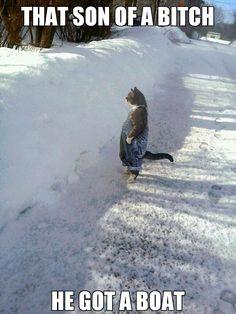 Cat neighbors - Imgur