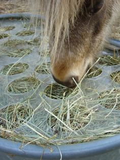 "Slow feeder/no waste hay feeder. Slow feeder/no waste hay feeder. 1/4"" plexiglass with 4"" holes. I wanna make one!"