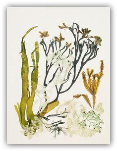 Seaweed art Pressed seaweeds Natural sea weed collage by AlgaNet
