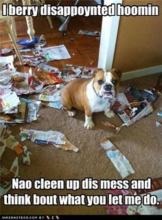 """""""I berry disappointed hoomin... Nao cleen up dis mess and think bout what you let me do!"""" ~ Dog Shaming shame - Bulldog"""