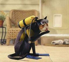 Cat Diving Suit Costume Picture #scubadivercostumes