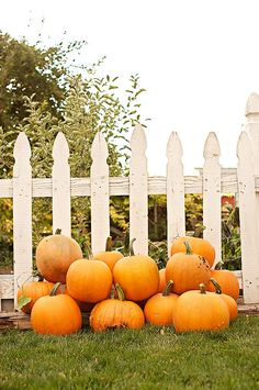 Pumpkins against a fence
