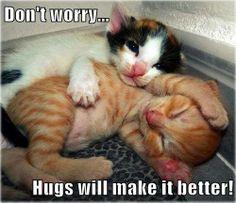 Hugs will make it better!   From: https://www.facebook.com/lovemeowfanpage