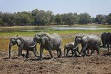 Big herd of African Bush Elephant at waterhole, Loxodonta africana, South Luangwa National Park, Zambia, Africa - Juergen Ritterbach/The Image Bank/Getty Images African Bush Elephant, World Thinking Day, Girl Scouts, My Images, Travel Guide, South Africa, National Parks, To Go, Zimbabwe