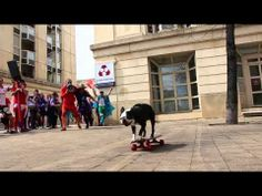 Tuxedo Dog skating in the Middle of an Event in Montpellier, France. http://www.bterrier.com/tuxedo-dog-skating-in-the-middle-of-an-event-in-montpellier-france/