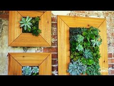 Wall-Mounted Succulent Planter Directions & Video @ Lowe's site