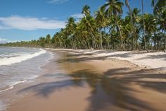 Costa do Dendê: explore o belo destino da Bahia - Creative Commons/Danielle Pereira/Flickr