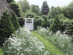 White flowers flank a grass path which leads to a gate -- DHDA Garden Design