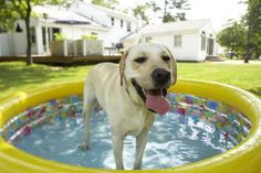 Tips for Keeping Dogs Cool in the Summer Heat.  My dogs have their own pool in summer but we do let them join us in ours too.