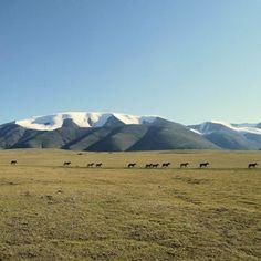 En Mongolie, les steppes et le désert de Gobi                              …