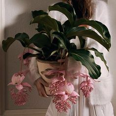 outdoors in. purify the air with houseplants. cultivate an indoor garden. Medinilla magnifica outdoors in. purify the air with houseplants. cultivate an indoor garden. Wild Baby Rabbits, Exotic Flowers, Beautiful Flowers, Arte Floral, Green Life, Plant Decor, Garden Projects, Houseplants, Indoor Plants