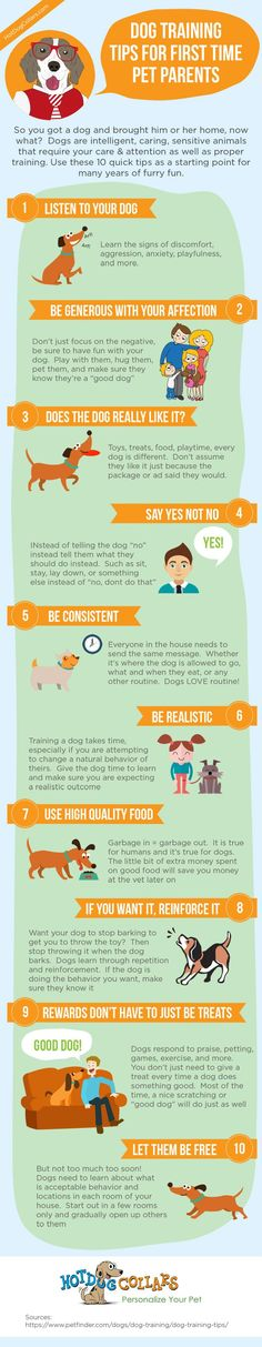 Dog Training Tips For First Time Pet Parents