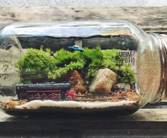 Terrariums, Terrarium Scene, Terrarium Diy, Plants In Bottles, Mini Bonsai, Bottle Garden, Pet Cage, Harry Potter Diy, Planter Boxes