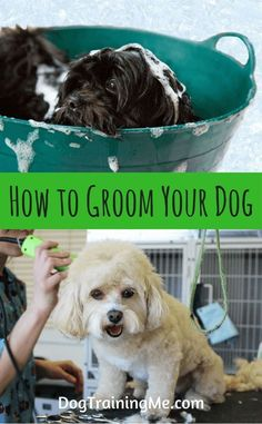 199 best pets images on pinterest animal kingdom fluffy pets and do you want to learn how to groom your dog at home and save some money solutioingenieria Gallery