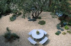 Old apple tree in gravel garden and elegant dining area.