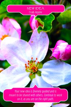 flower therapy oracle cards - Pesquisa Google
