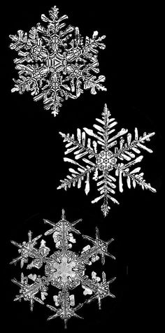 snowflake crystals  #snow #winter #nature