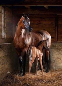 Mother and young foal