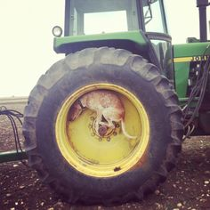 Maddie standing on the inside of a tractor tire.
