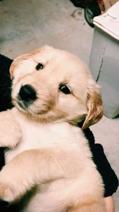 Taylorkatiee On Vsco In 2020 Dogs Cute Puppies Cute Animals