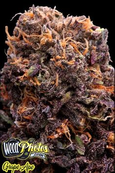 Grape Ape Marijuana Strain Pictures
