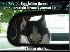 Choose wisely haha...I love huskies