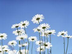 Macro fiori - Foto per sfondi desktop: http://wallpapic.it/paesaggi/macro-fiori/wallpaper-41044