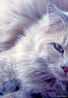 Gato  © Sílvia Afonso