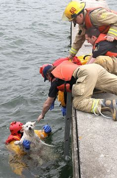 Amazing Rescue: Firefighters Retrieve a Blind Dog Who'd Fallen Into Lake Ontario | Dogster