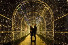 source - Kew Gardens at Christmas