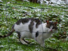 Cómo proteger a tu gato del frío | Cuidar de tu mascota es facilisimo.com