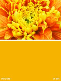 Sherwin-Williams yellow paint color – Gusto Gold (SW 6904)