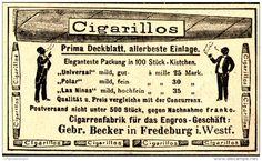 Original-Werbung/ Anzeige 1898 - CIGARILLOS / GEBR. BECKER - FREDEBURG - ca. 90…