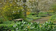 Woodland Garden Beth Chatto - Bing Images
