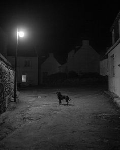 On the first day of 2010 I took advantage of the night lights and encountered this dog on the island of #Batz in #Bretagne which is like a small village dropped in the middle of the sea and isolated from the noise of the world photographer Ludovic Maillard (@ludovic_maillard) remembers This island as been a shelter for three generations for my family. A tiny place rich with infinite atmospheres it is perfect for the photographic meditation that I like to practice. He adds This picture is…