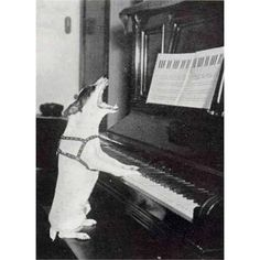 Jack Russell Terrier - A Dog in One Pack - Champion Dogs Funny Dogs, Funny Animals, Cute Animals, Rat Terriers, Terrier Dogs, Vintage Dog, Vintage Humor, Dog Photos, Dog Pictures