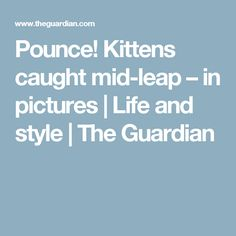 Pounce! Kittens caught mid-leap – in pictures | Life and style | The Guardian
