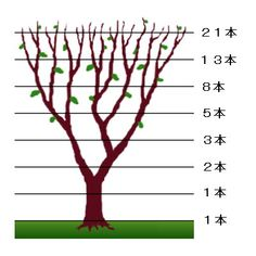landscape detail matters.   Ubiquitous Crepe myrtles not murdered can be so lovely if pruned to fibonacci dimensions.  枝分かれ