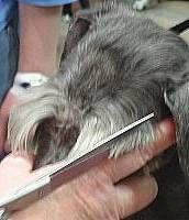Scissor the eyebrows into a V.