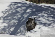 Love the stump...love the shadow!