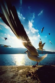 the birds that are flying behind the focal point of this photo really give it that tranquil feel. awesome photo!