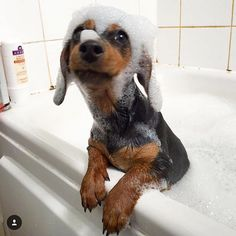 Rub-a-dub-dub, it's a Dach in a tub