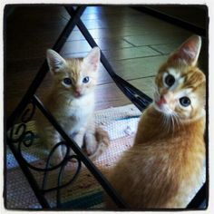 Adopted brother and sister five years ago today.