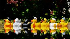 Dowleys :: Villagers fill local potholes with rubber ducks