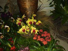 Orchidea kiállításon Budapesten 2015-ben.