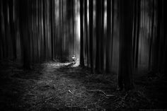 Darkness by Bastien HAJDUK on 500px