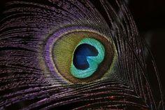 Purple-essence